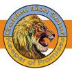 Golden Lion Solar Panles Solution